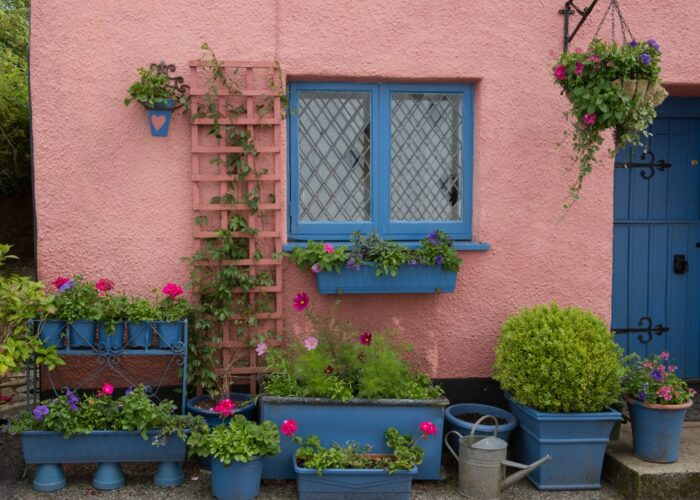 Display of Flowers in Front of a Pink Cottage in the Ancient Market Town of Chulmleigh in Rural Devon, England, UK