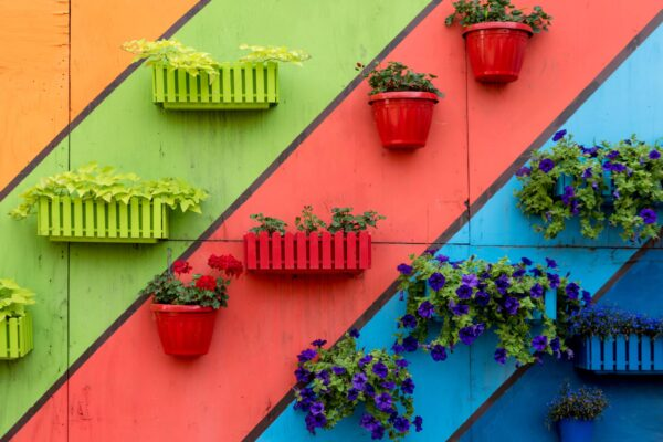 Plants,And,Flowers,In,Wooden,And,Plastic,Pots,On,Colorful